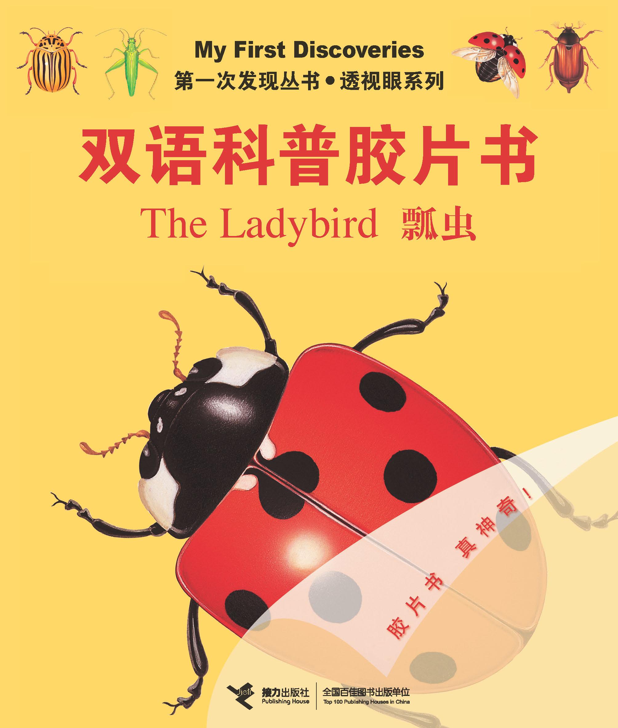 瓢虫:英汉对照